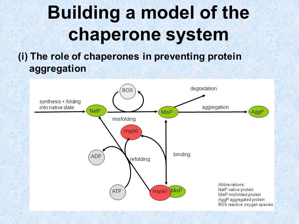 Building a model of the chaperone system (i) The role of chaperones in preventing protein aggregation refolding binding aggregation degradation synthe