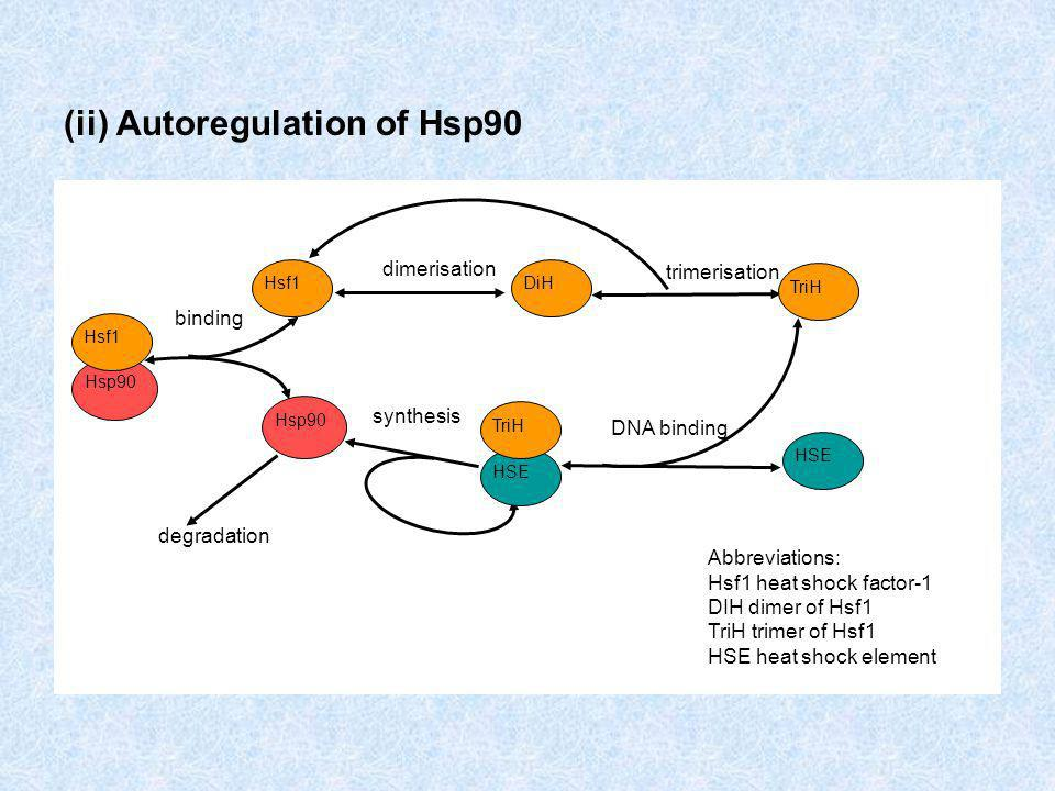 (ii) Autoregulation of Hsp90 Abbreviations: Hsf1 heat shock factor-1 DIH dimer of Hsf1 TriH trimer of Hsf1 HSE heat shock element Hsp90 Hsf1 Hsp90 Hsf1 binding degradation dimerisation synthesis TriH DiH trimerisation HSE TriH DNA binding