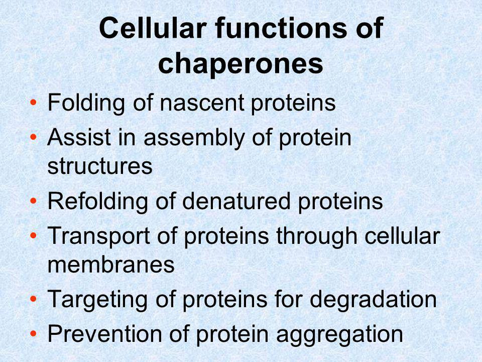 Cellular functions of chaperones Folding of nascent proteins Assist in assembly of protein structures Refolding of denatured proteins Transport of pro