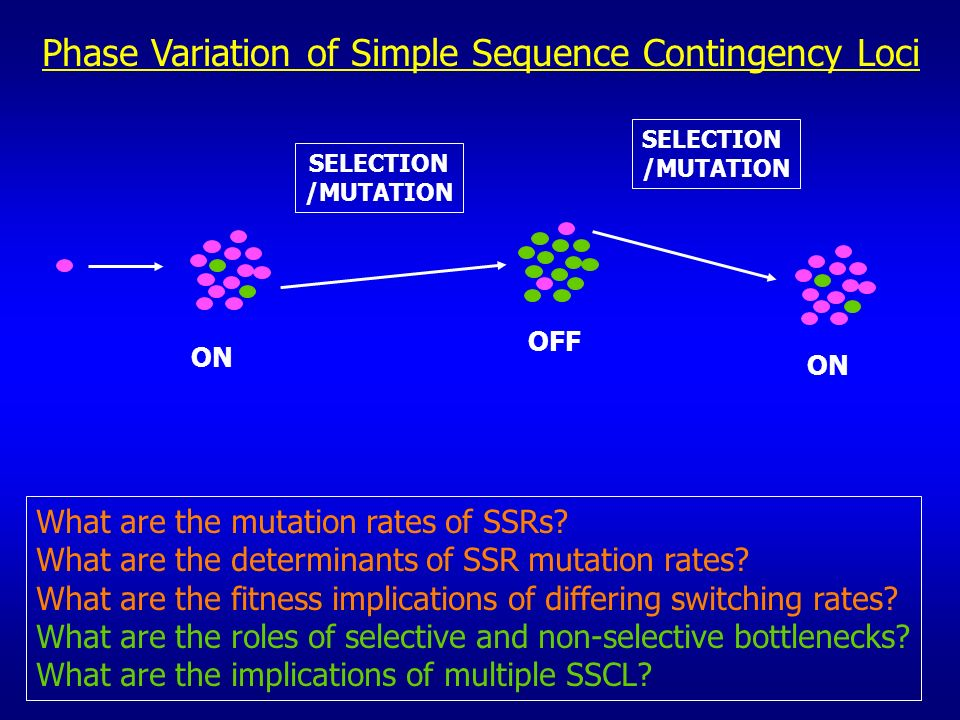 Phase Variation of Simple Sequence Contingency Loci ON OFF ON SELECTION /MUTATION SELECTION /MUTATION What are the mutation rates of SSRs? What are th