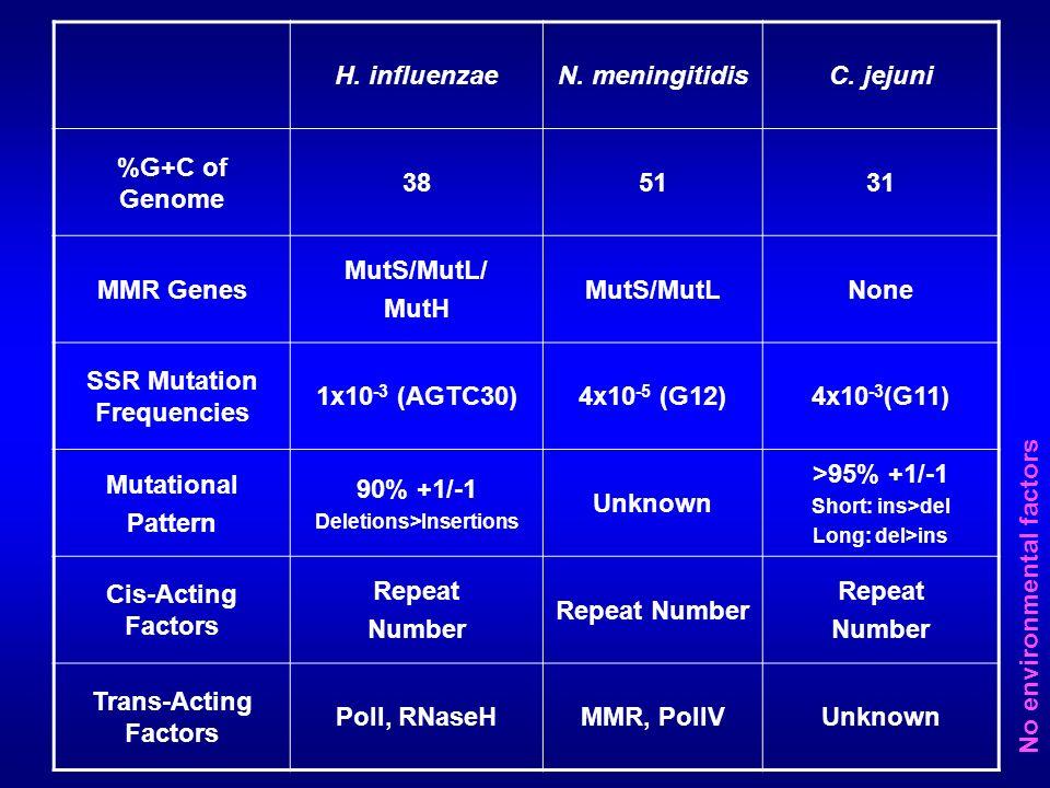 H. influenzaeN. meningitidisC. jejuni %G+C of Genome 385131 MMR Genes MutS/MutL/ MutH MutS/MutLNone SSR Mutation Frequencies 1x10 -3 (AGTC30)4x10 -5 (