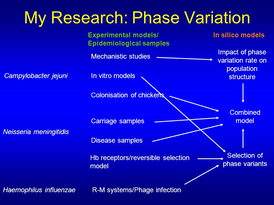 My Research: Phase Variation Campylobacter jejuni Hb receptors/reversible selection model Mechanistic studies Neisseria meningitidis Haemophilus influenzae In vitro models Colonisation of chickens R-M systems/Phage infection Carriage samples Disease samples Impact of phase variation rate on population structure Selection of phase variants Combined model Experimental models/ Epidemiological samples In silico models