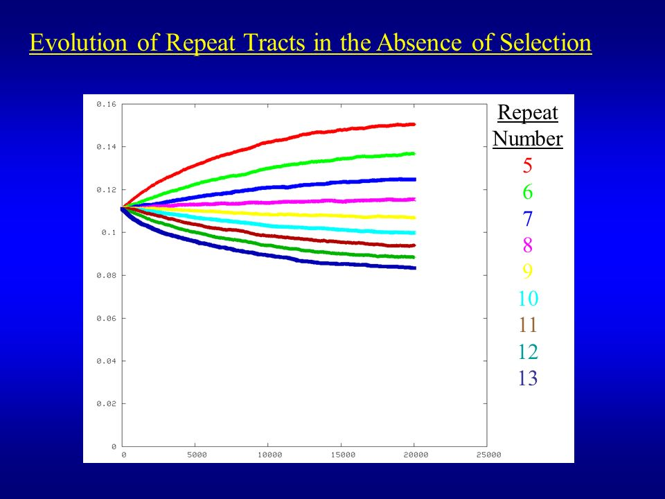 Repeat Number 5 6 7 8 9 10 11 12 13 Evolution of Repeat Tracts in the Absence of Selection