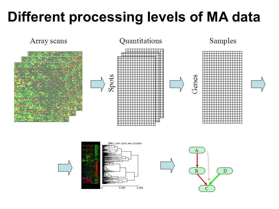 Array scans Spots Quantitations Genes Samples Different processing levels of MA data A B C D