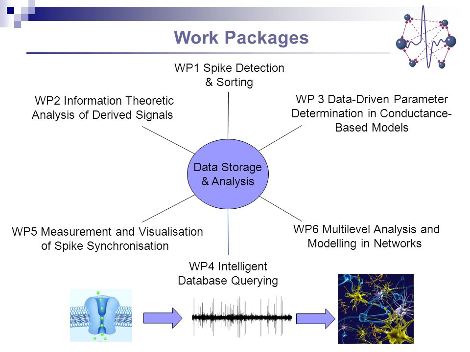 Work Packages Data Storage & Analysis WP1 Spike Detection & Sorting WP2 Information Theoretic Analysis of Derived Signals WP 3 Data-Driven Parameter Determination in Conductance- Based Models WP5 Measurement and Visualisation of Spike Synchronisation WP6 Multilevel Analysis and Modelling in Networks WP4 Intelligent Database Querying