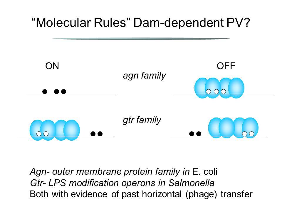 Molecular Rules Dam-dependent PV.