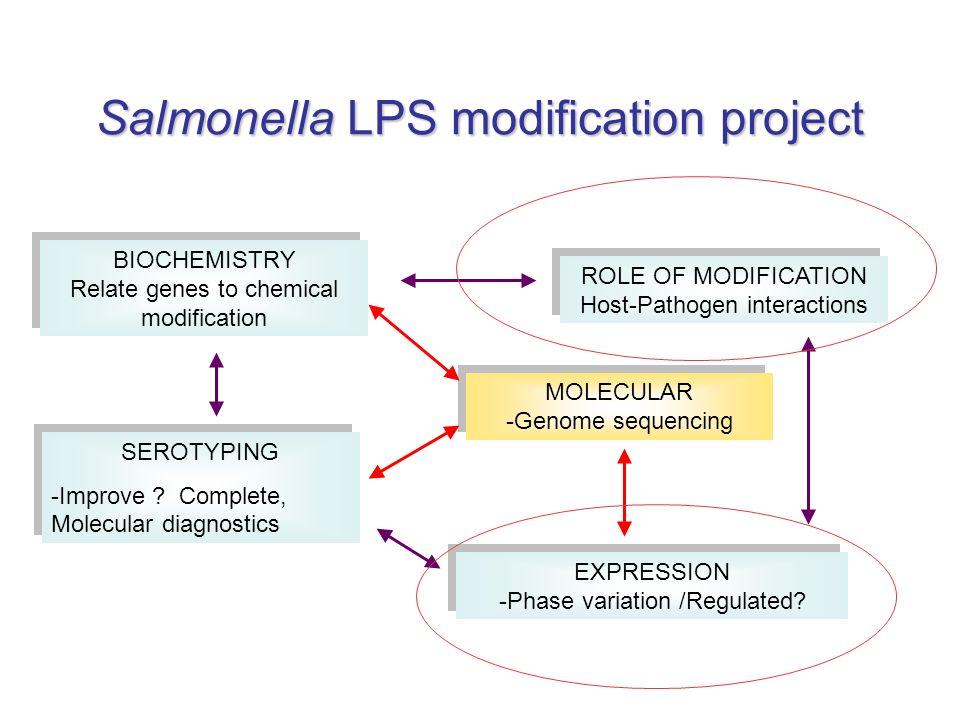 Salmonella LPS modification project SEROTYPING -Improve .