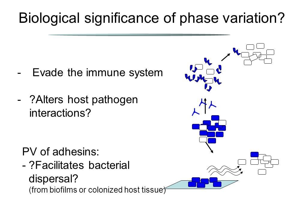 Biological significance of phase variation.PV of adhesins: -?Facilitates bacterial dispersal.