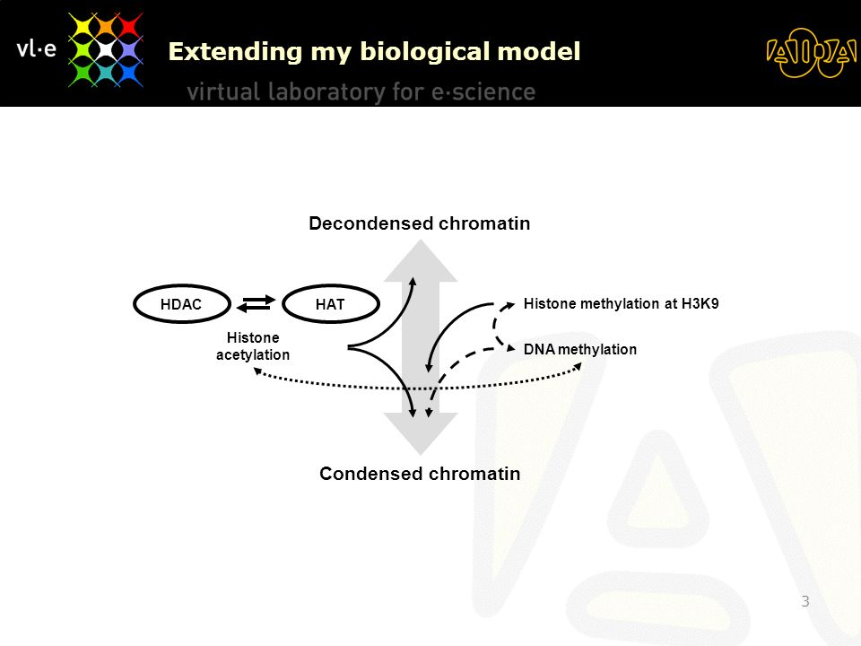 3 Decondensed chromatin Condensed chromatin Histone methylation at H3K9 DNA methylation HDAC HAT Histone acetylation Extending my biological model