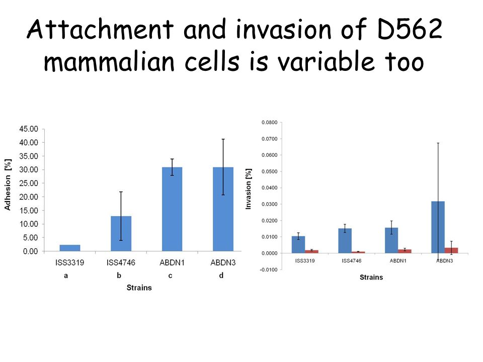 Attachment and invasion of D562 mammalian cells is variable too