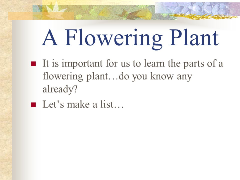 A Flowering Plant It is important for us to learn the parts of a flowering plant…do you know any already? Lets make a list…