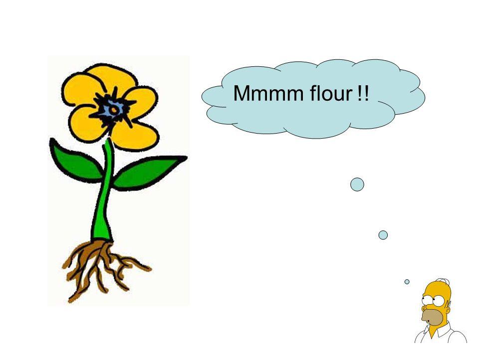 Mmmm flour !!