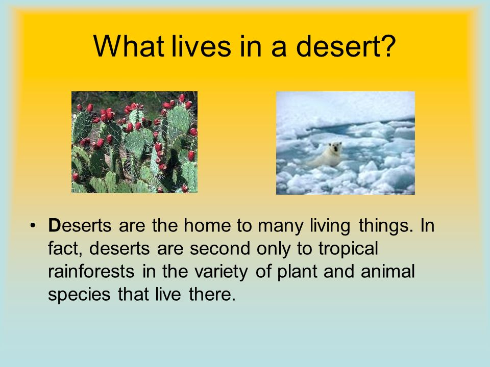Cold deserts There are cold deserts as well, such as Antarctica and the areas of Northern Canada. Here, although summers are cool and winters are very