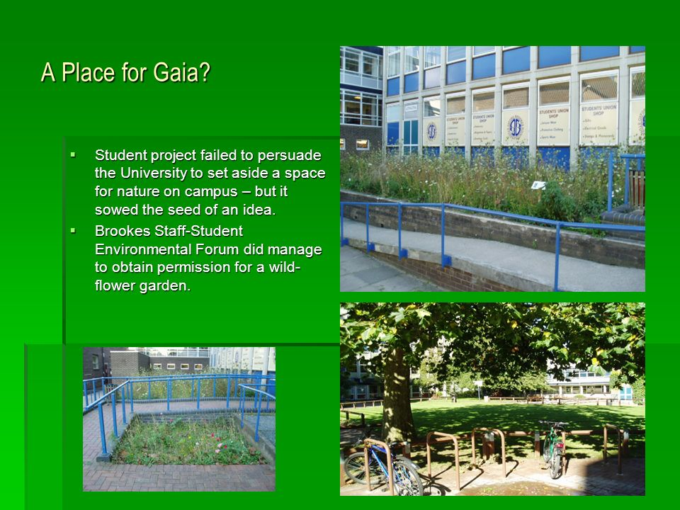A Place for Gaia? Student project failed to persuade the University to set aside a space for nature on campus – but it sowed the seed of an idea. Stud