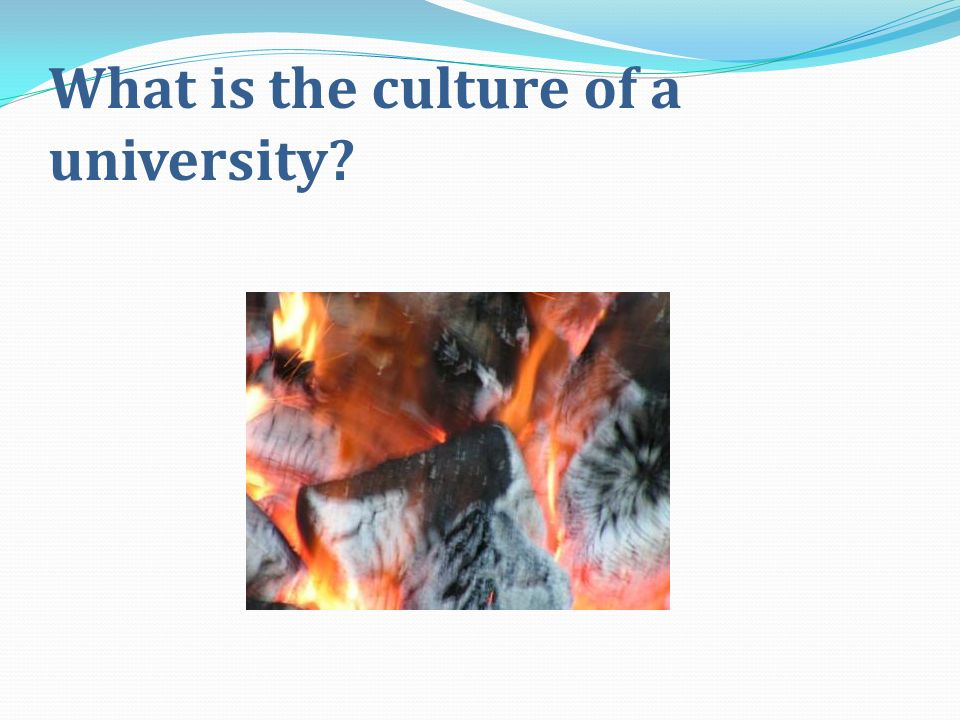 What is the culture of a university
