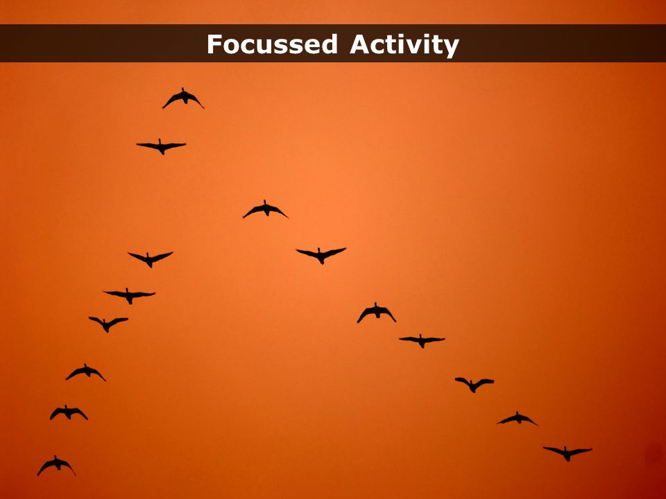 Geese – fade through Random ActivityFocussed Activity