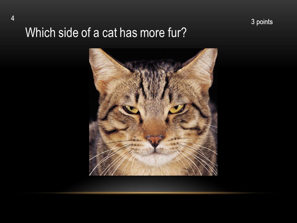 Which side of a cat has more fur? 3 points 4