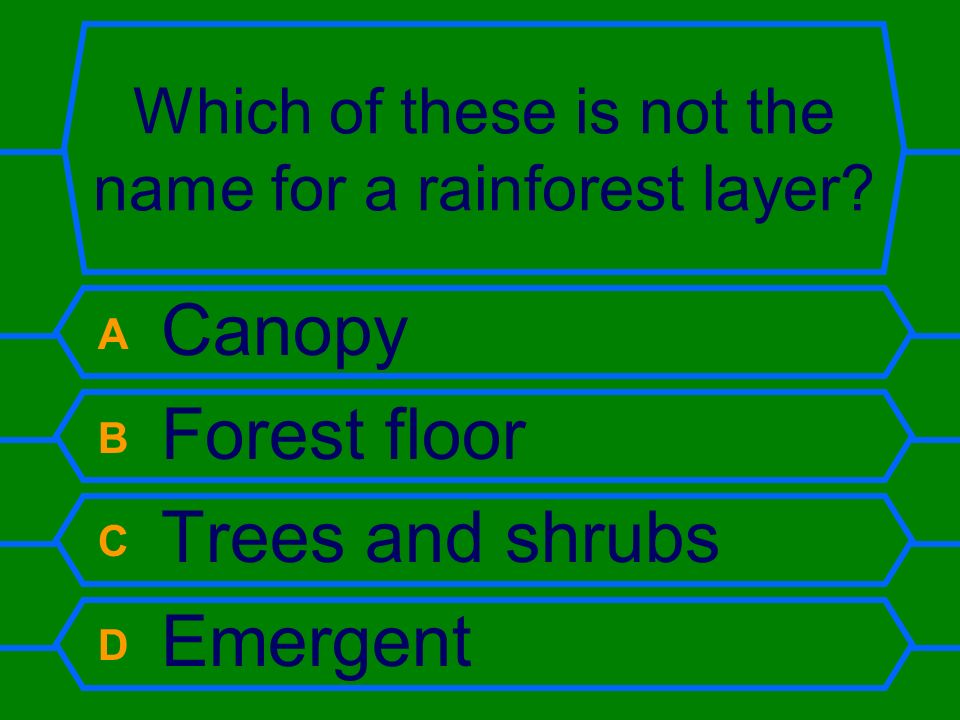 Which of these is not the name for a rainforest layer.