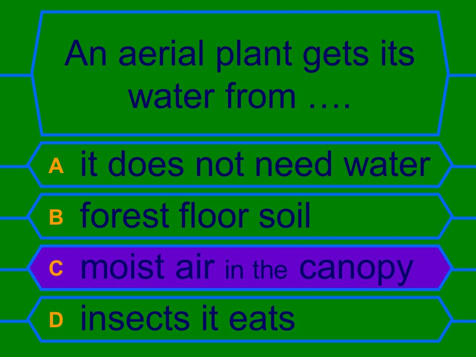 An aerial plant gets its water from …. A it does not need water B forest floor soil C moist air in the canopy D insects it eats
