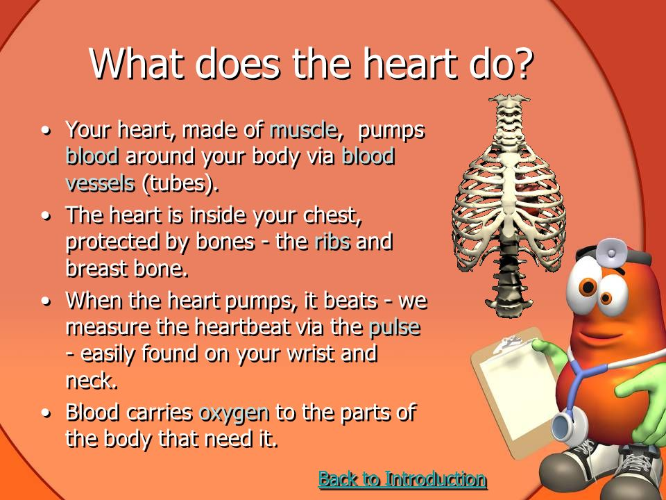 Heart and Lungs Quiz Your heart pumps blood around your body.