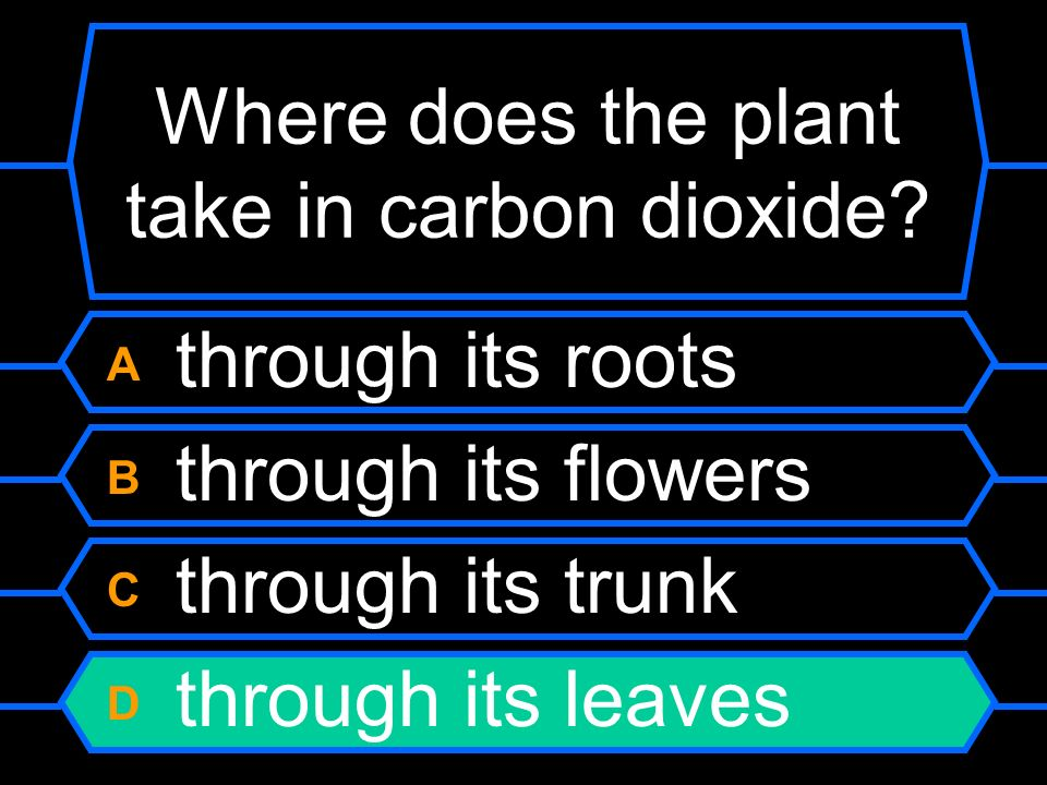 Where does the plant take in carbon dioxide.