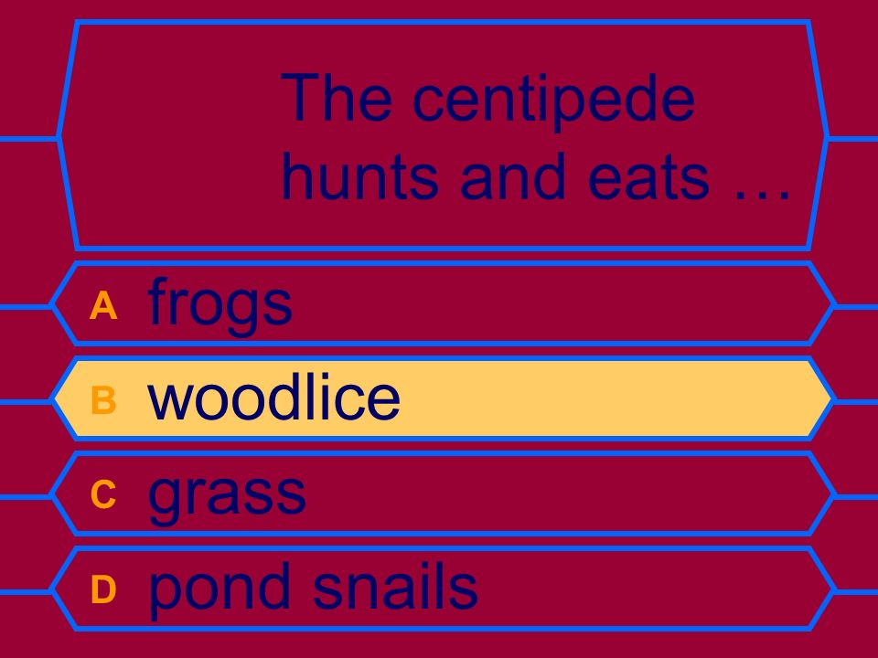 The centipede hunts and eats … A frogs B woodlice C grass D pond snails