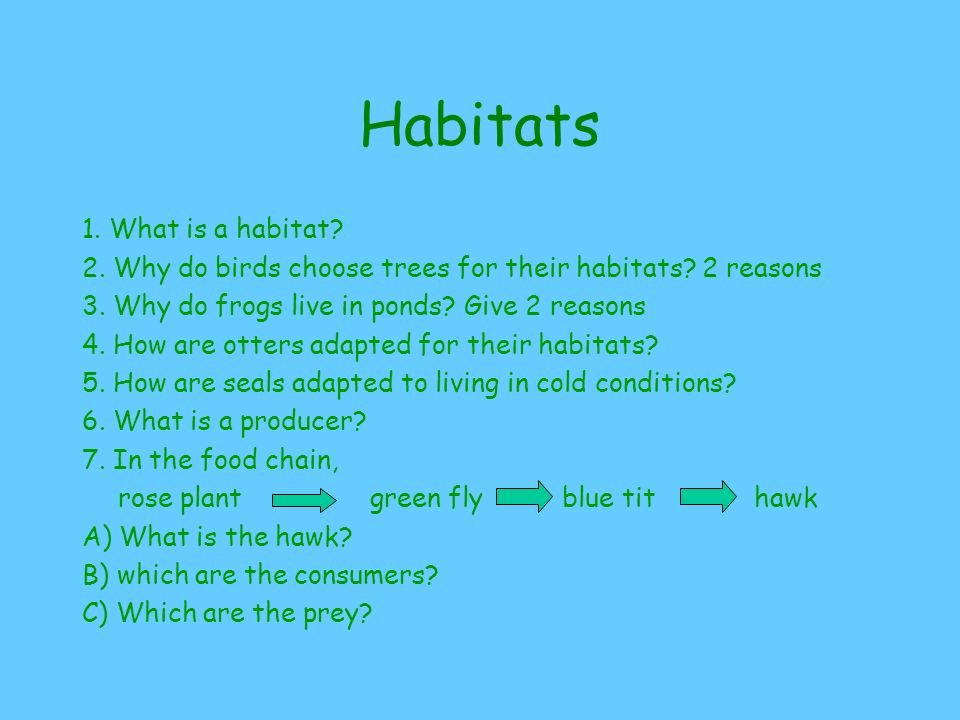 Habitats 1.What is a habitat. 2. Why do birds choose trees for their habitats.