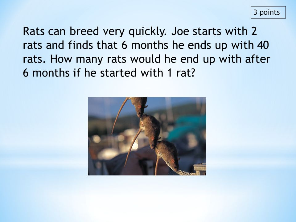Rats can breed very quickly. Joe starts with 2 rats and finds that 6 months he ends up with 40 rats. How many rats would he end up with after 6 months