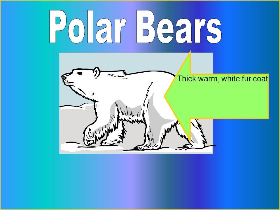 Thick warm, white fur coat