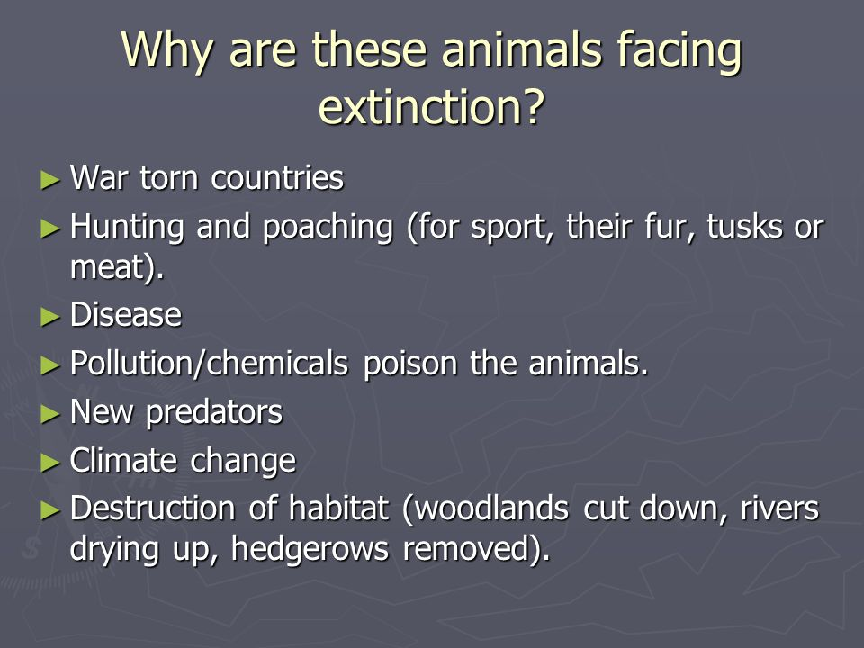 Why are these animals facing extinction? War torn countries War torn countries Hunting and poaching (for sport, their fur, tusks or meat). Hunting and