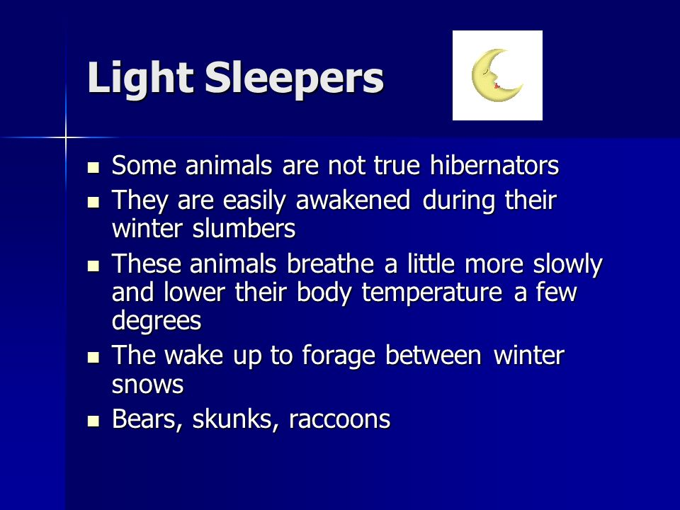 Light Sleepers Some animals are not true hibernators Some animals are not true hibernators They are easily awakened during their winter slumbers They