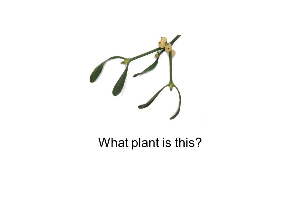 What plant is this