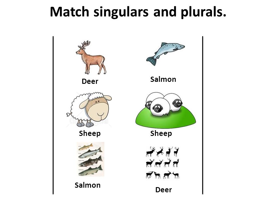 Match singulars and plurals. Sheep Deer Salmon Sheep Deer Salmon