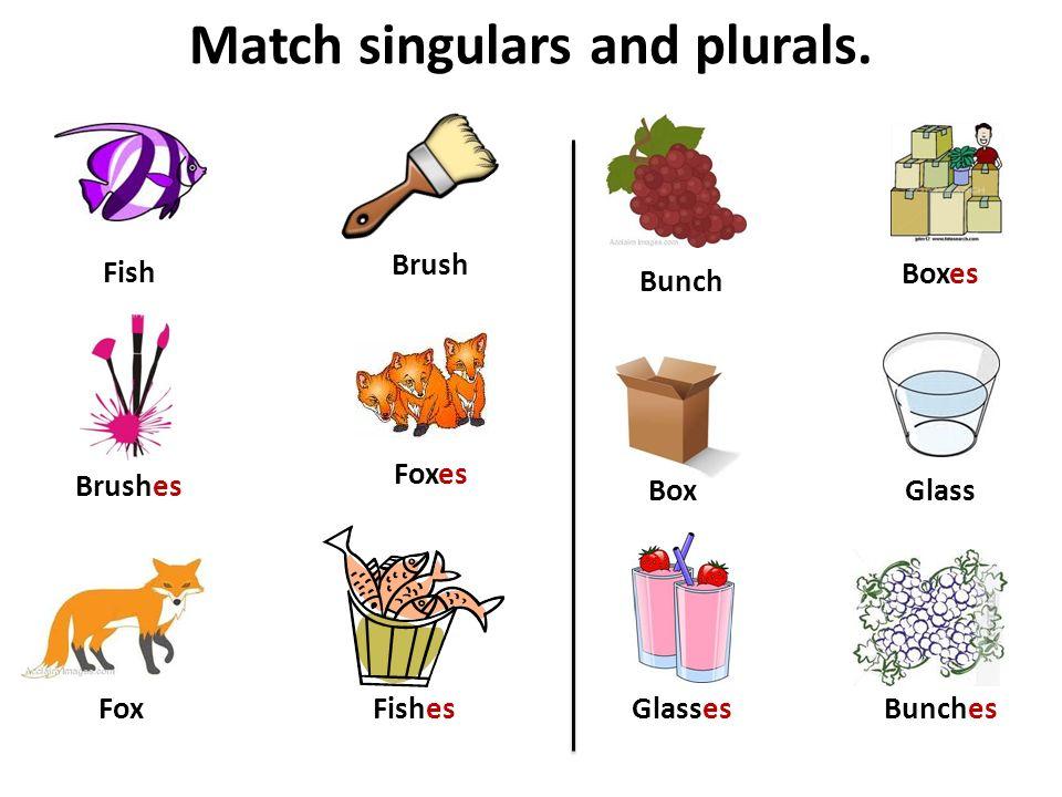Match singulars and plurals. Box Brush Fish Boxes Brushes Fishes Foxes Fox Bunch BunchesGlasses Glass