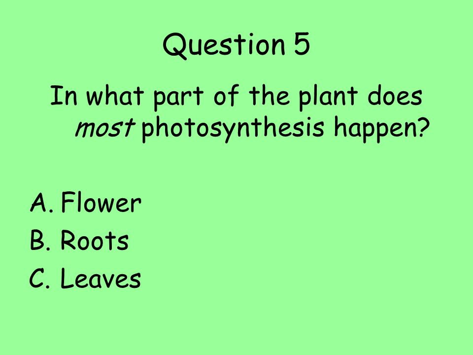 Question 5 In what part of the plant does most photosynthesis happen? A.Flower B.Roots C.Leaves