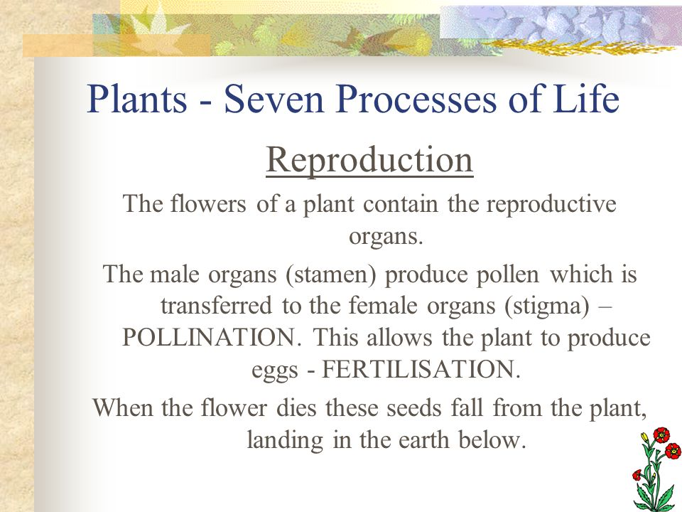 Plants - Seven Processes of Life Reproduction The flowers of a plant contain the reproductive organs. The male organs (stamen) produce pollen which is