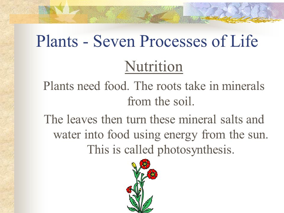 Plants - Seven Processes of Life Nutrition Plants need food. The roots take in minerals from the soil. The leaves then turn these mineral salts and wa