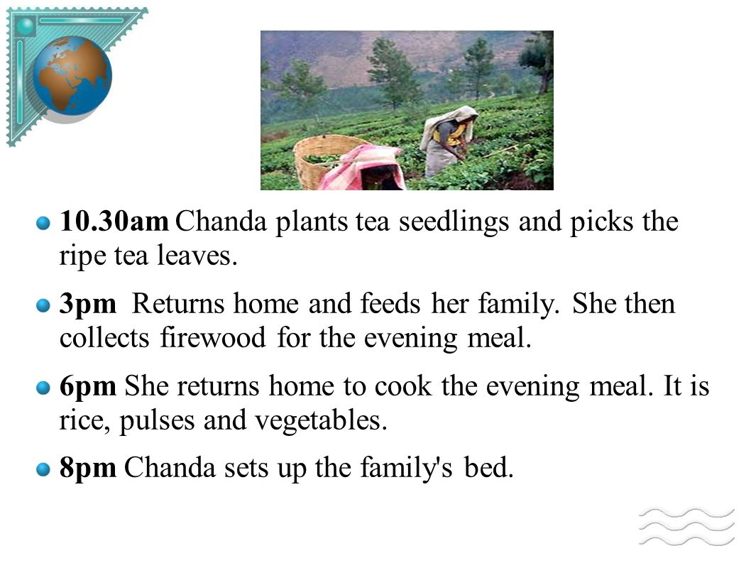 10.30am Chanda plants tea seedlings and picks the ripe tea leaves. 3pm Returns home and feeds her family. She then collects firewood for the evening m