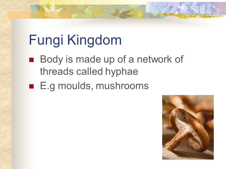 Fungi Kingdom Body is made up of a network of threads called hyphae E.g moulds, mushrooms
