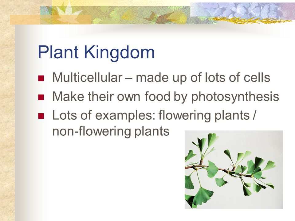 Plant Kingdom Multicellular – made up of lots of cells Make their own food by photosynthesis Lots of examples: flowering plants / non-flowering plants