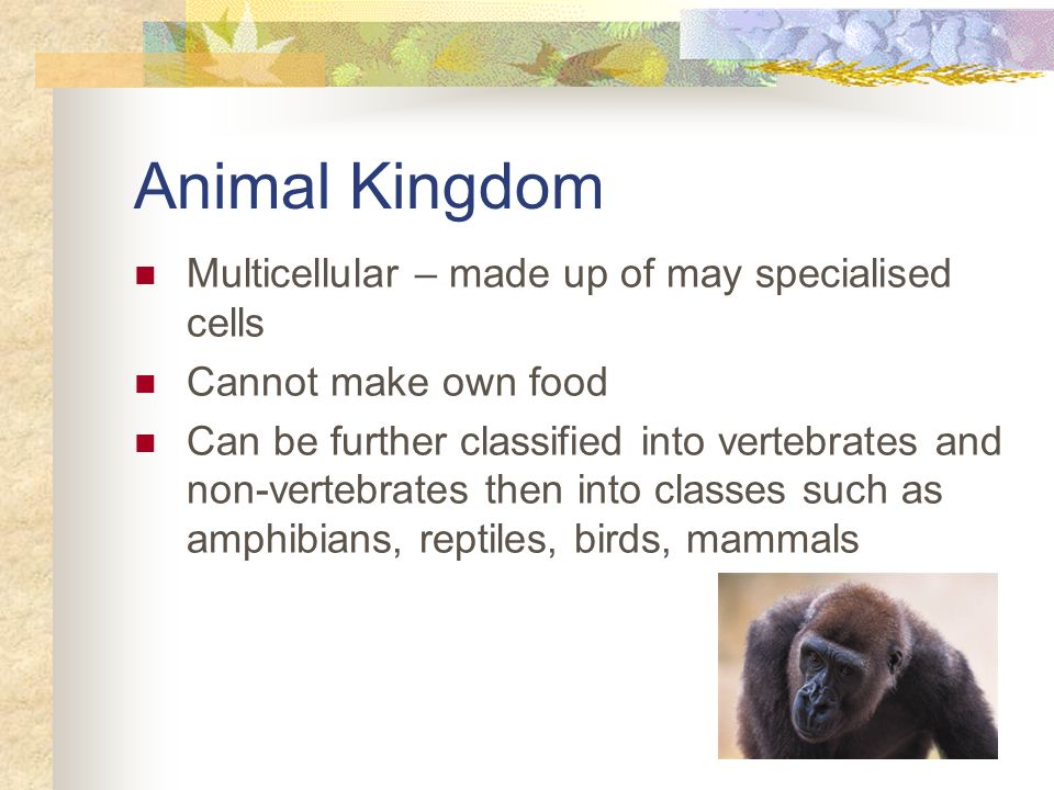Animal Kingdom Multicellular – made up of may specialised cells Cannot make own food Can be further classified into vertebrates and non-vertebrates th