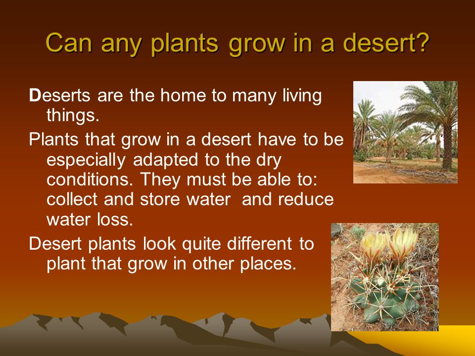 Can any plants grow in a desert? Deserts are the home to many living things. Plants that grow in a desert have to be especially adapted to the dry con