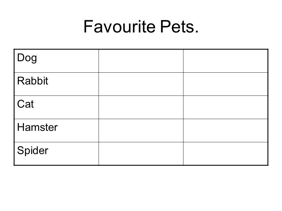 Favourite Pets. Dog Rabbit Cat Hamster Spider