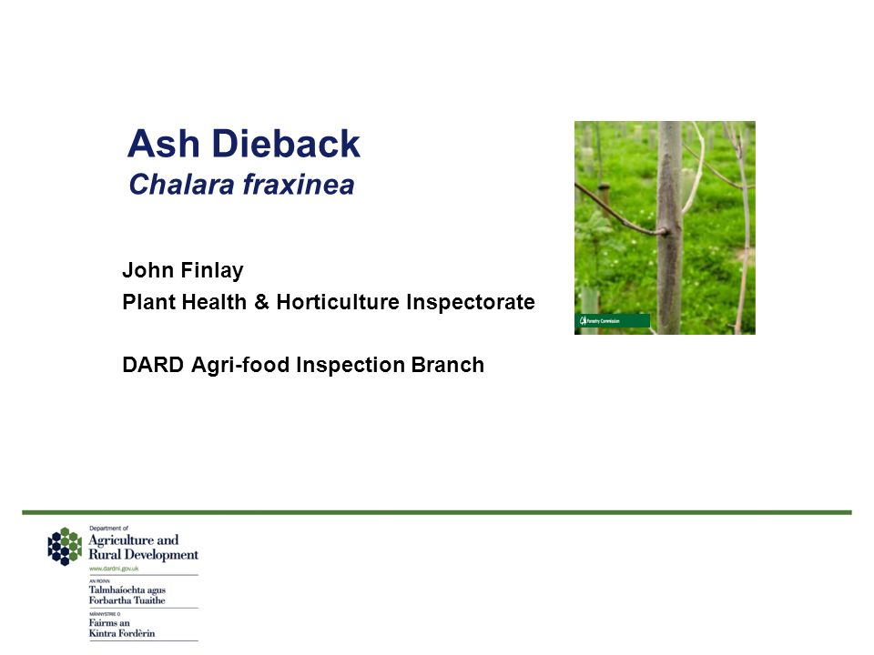 Ash Dieback Chalara fraxinea John Finlay Plant Health & Horticulture Inspectorate DARD Agri-food Inspection Branch