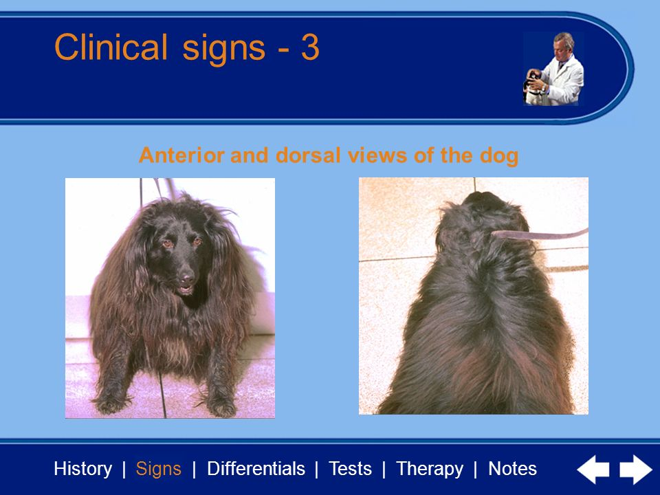 History | Signs | Differentials | Tests | Therapy | Notes Clinical signs - 3 Signs Anterior and dorsal views of the dog