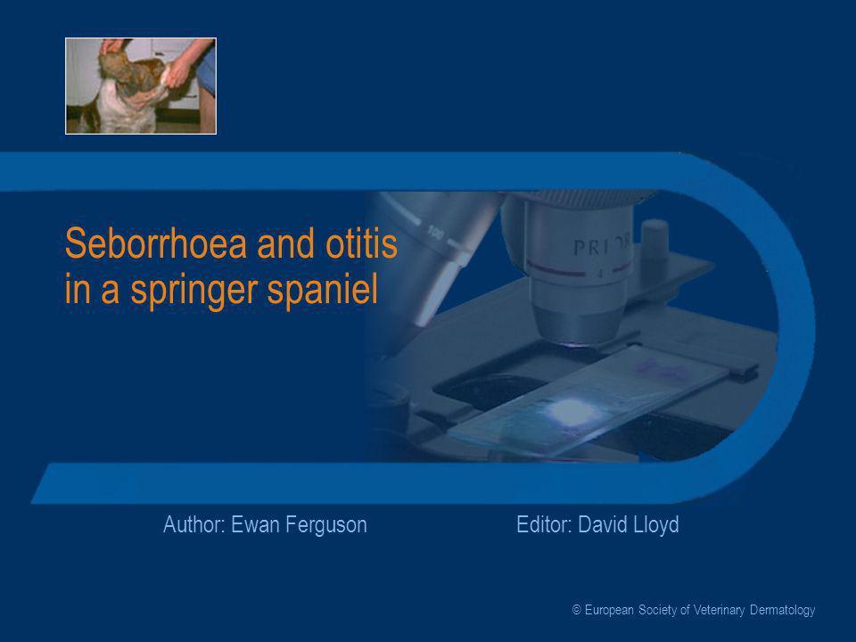 Seborrhoea and otitis in a springer spaniel Author: Ewan FergusonEditor: David Lloyd © European Society of Veterinary Dermatology