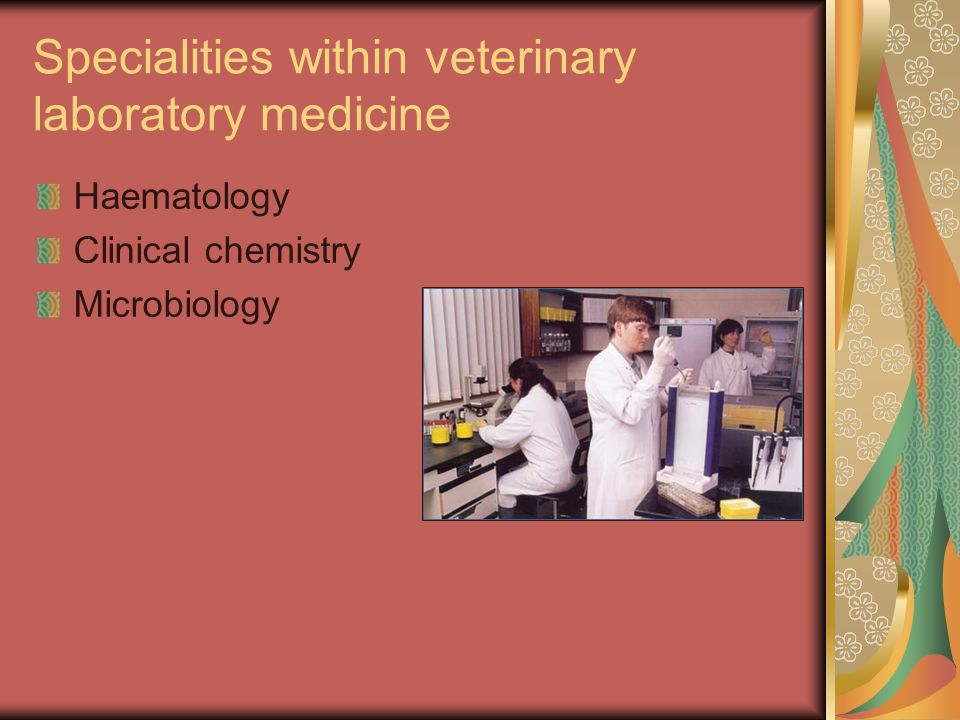 Specialities within veterinary laboratory medicine Haematology Clinical chemistry Microbiology