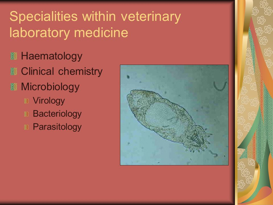 Specialities within veterinary laboratory medicine Haematology Clinical chemistry Microbiology Virology Bacteriology Parasitology