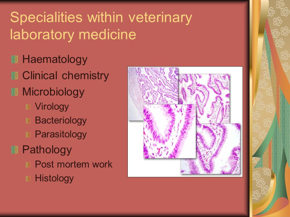 Specialities within veterinary laboratory medicine Haematology Clinical chemistry Microbiology Virology Bacteriology Parasitology Pathology Post morte