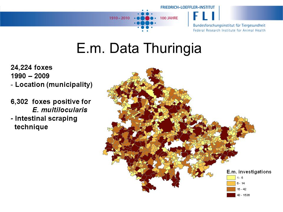 E.m. Data Thuringia 24,224 foxes 1990 – 2009 - Location (municipality) 6,302 foxes positive for E. multilocularis - Intestinal scraping technique